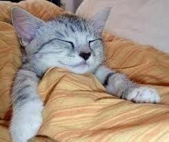 Tanda dan Gejala Kucing Sakit
