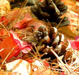 https://www.etsy.com/listing/165146697/autumn-forest-floor-pine-cones-october?ref=sr_gallery_6&ga_search_query=autumn+photography&ga_page=7&ga_search_type=all&ga_view_type=gallery