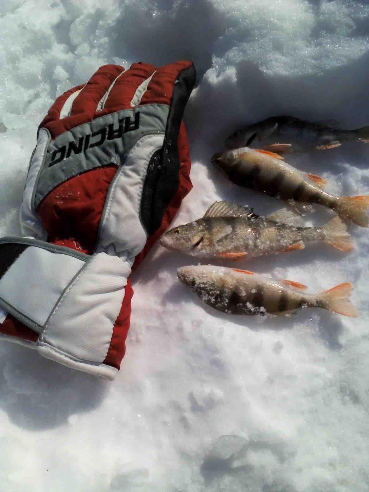рыбалка на реке нытва