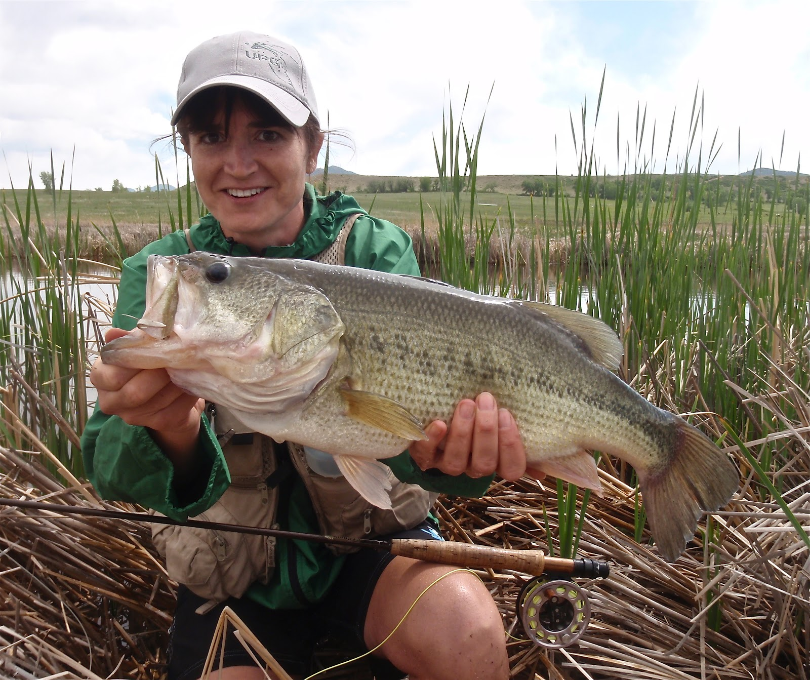 colorado fly fishing reports big bass on small flies
