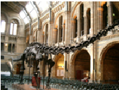 MUSEO DE HISTORIA NATURAL, LONDRES