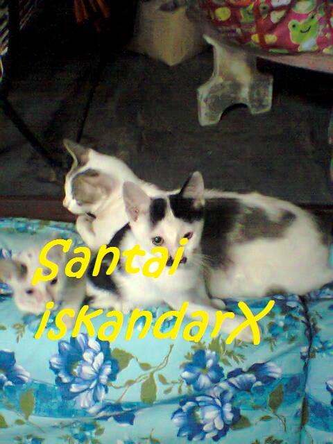 iskandarx.blogspot.com,santai,Faizal,Laili,Jupiter,Pluto,Charlicaplin,Neptune,Naili,Faizal terjaga masa is balik dari urus jenazah semalam