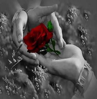 Compartir rosas Rosas en las manos