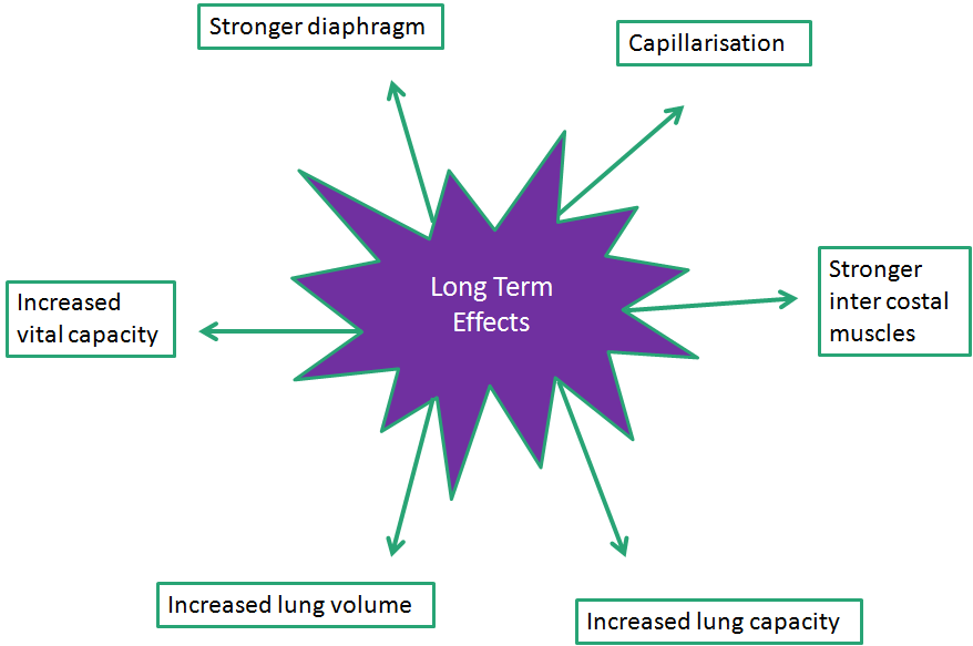 Long term effects of exercise on the skeletal system