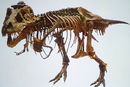Cara Arkeolog Mengetahui Usia Fosil