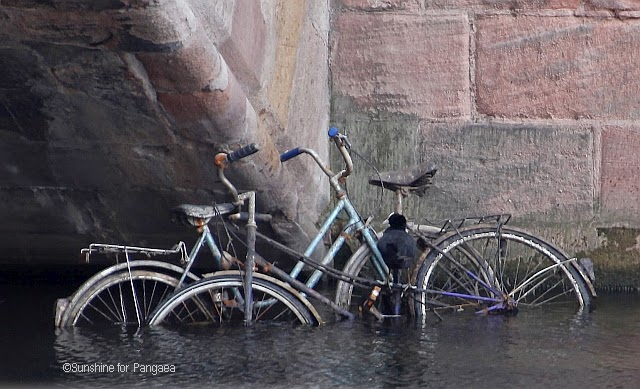 Repurpose of a bicycle by a coot