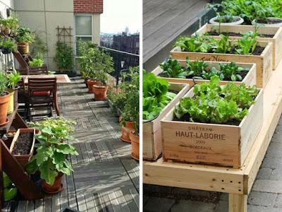 Balcony Veggie Garden