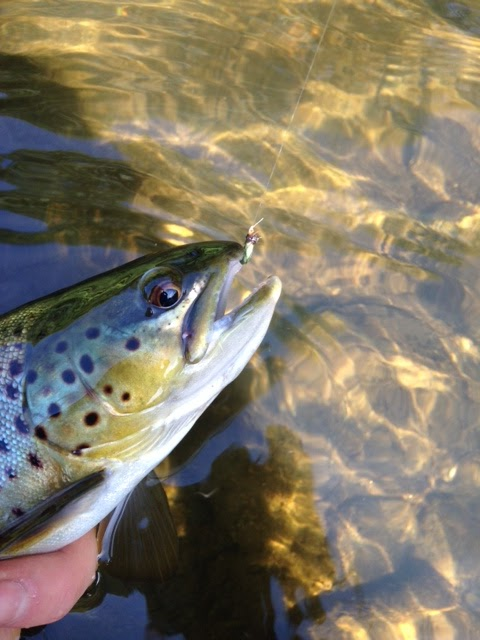 I fish new york fly fishing for trout in new york city for Fishing in new york city