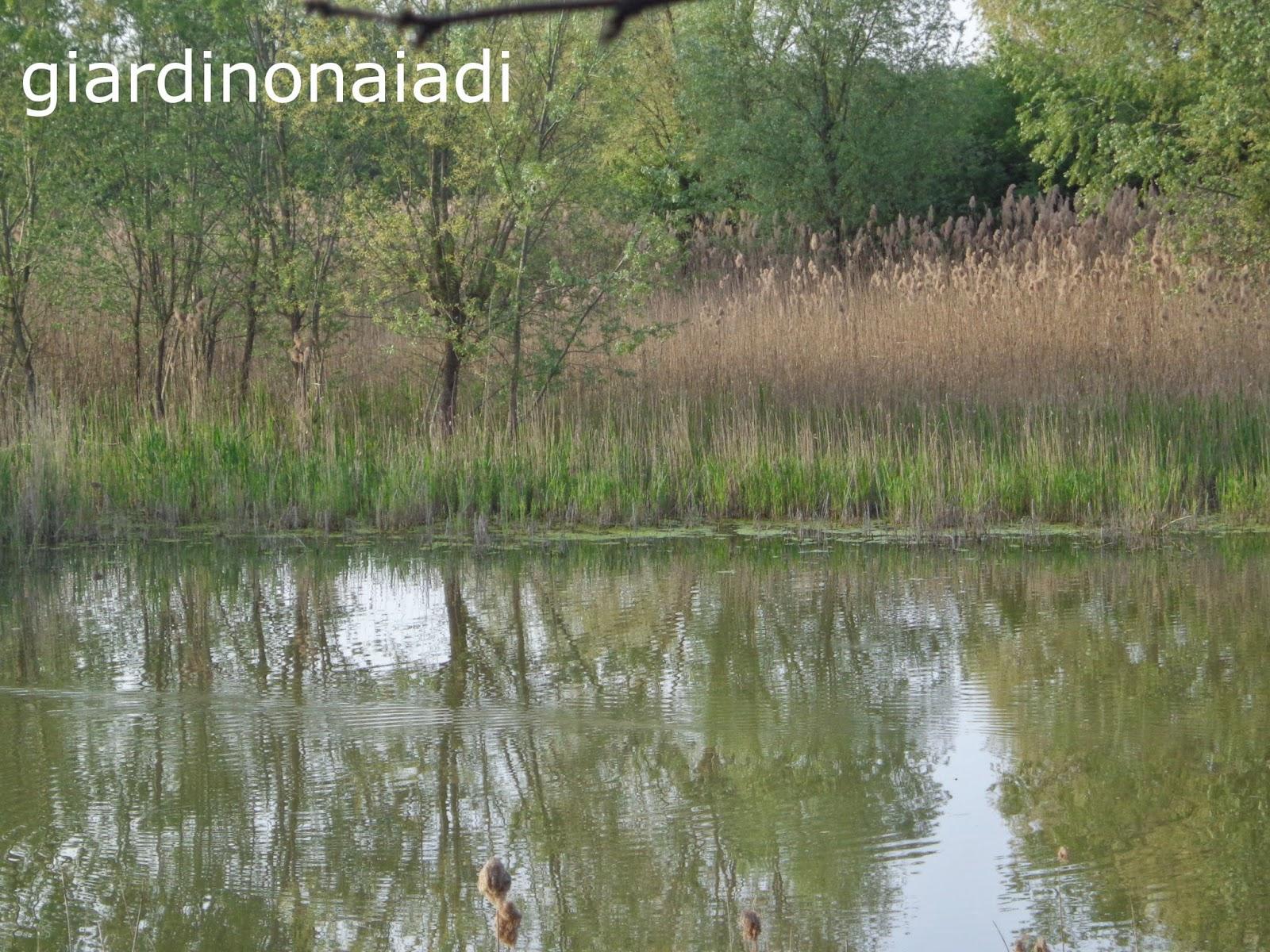 Il giardino delle naiadi la vita in uno stagno naturale - Foto di uno shamrock ...