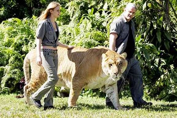MFS-Strange but TRUE: The LIGER