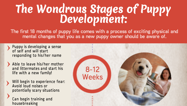 Image: The Wondrous Stages Of Puppy Development