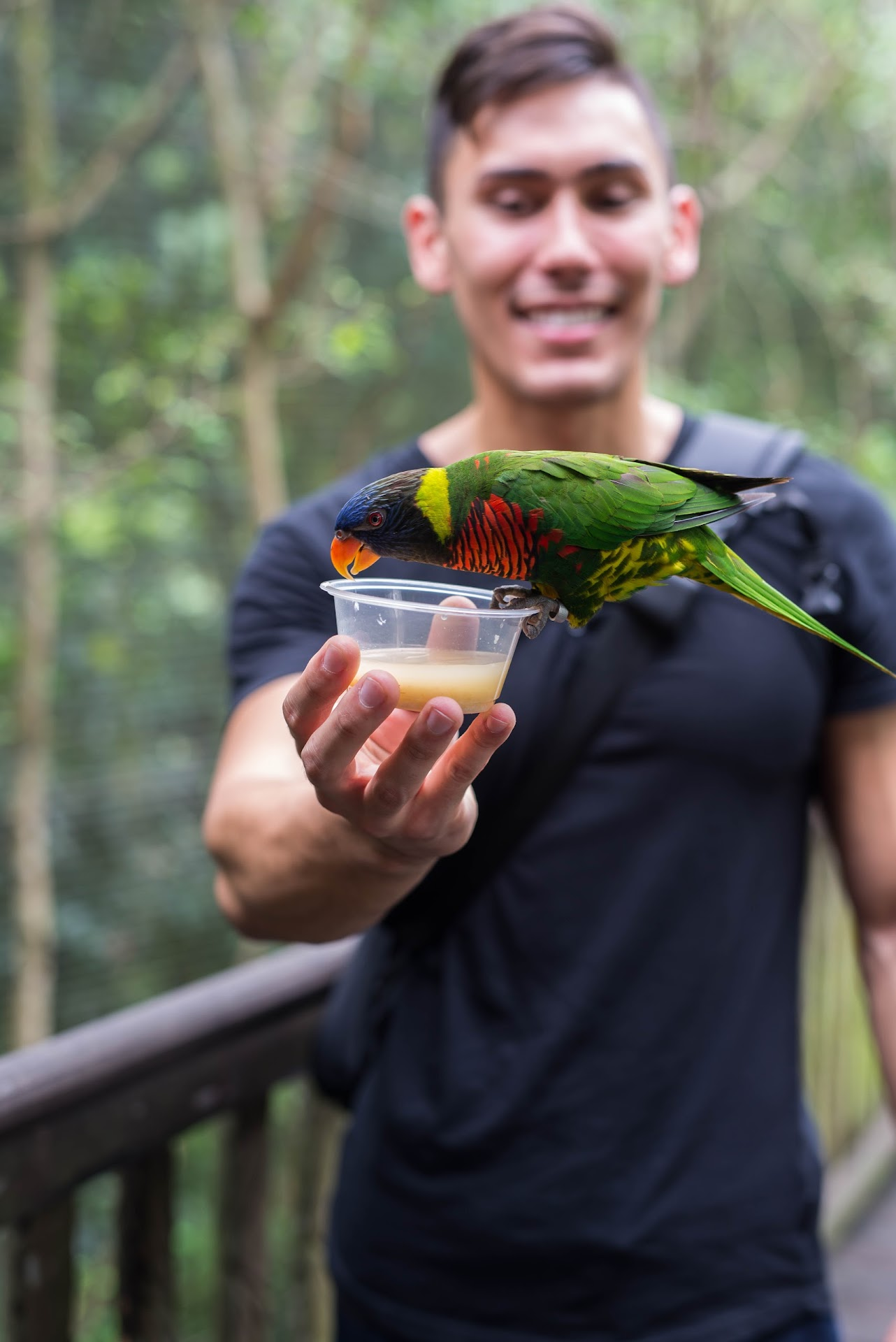 feeding birds, animals, zoo, animal park, jurong bird park, singapore guide, things to do, best, travel blogger, sf bay area, mormon lds