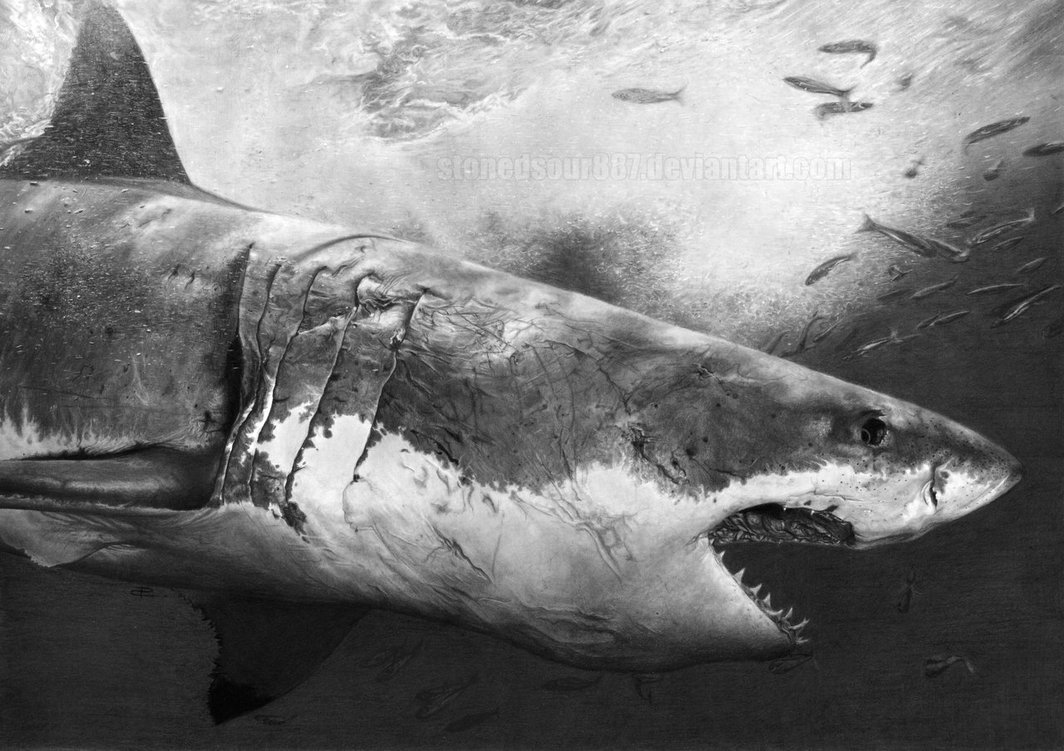 The Best Shark Dive in the World Realistic Shark Drawing