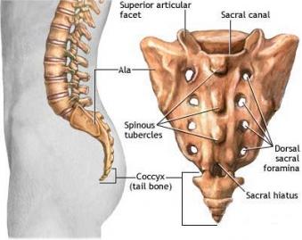 Solusi Mengatasi Masalah Sakit Tulang Ekor