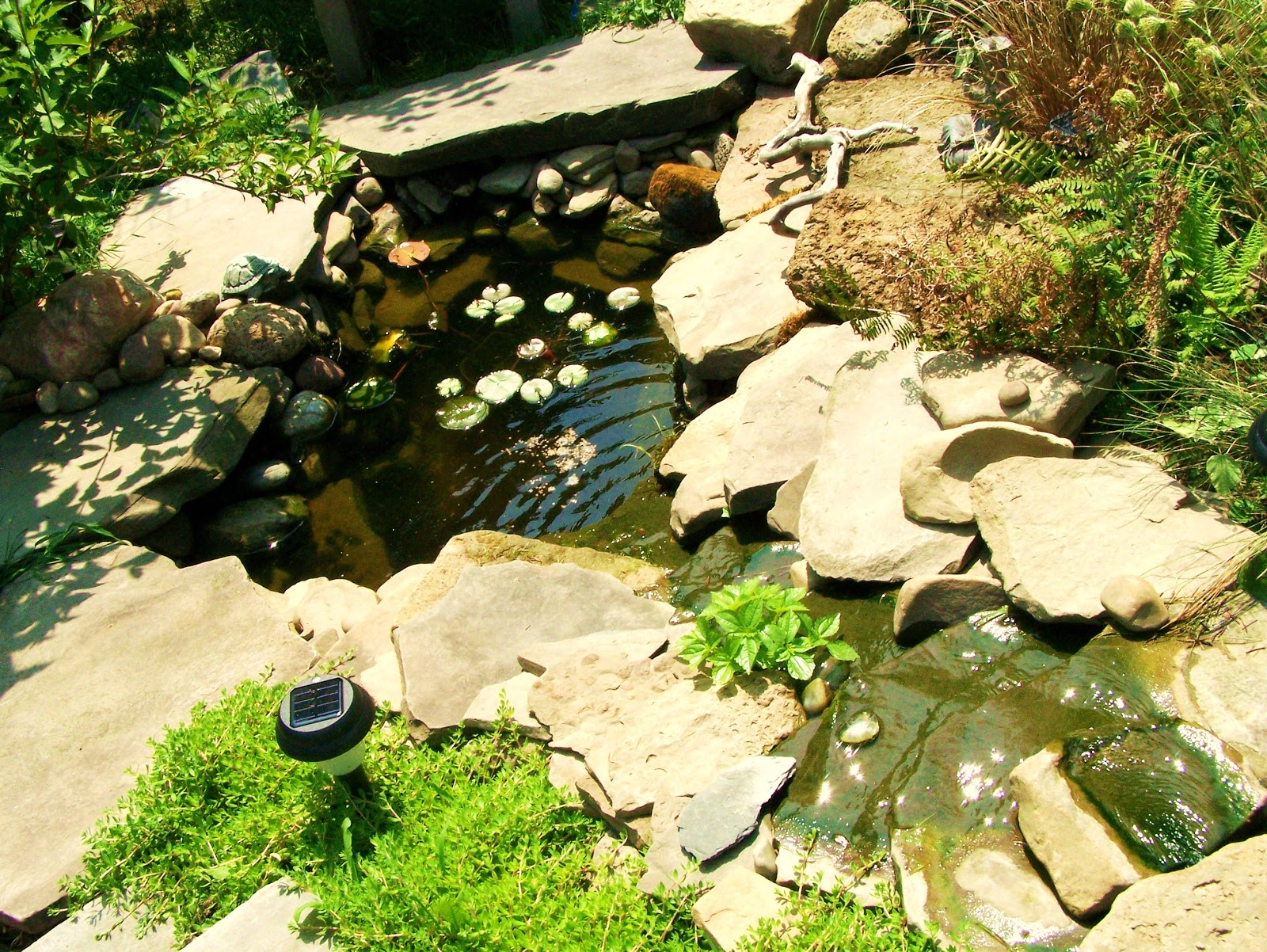 Artful Express Creative Life Garden Goldfish Pond That