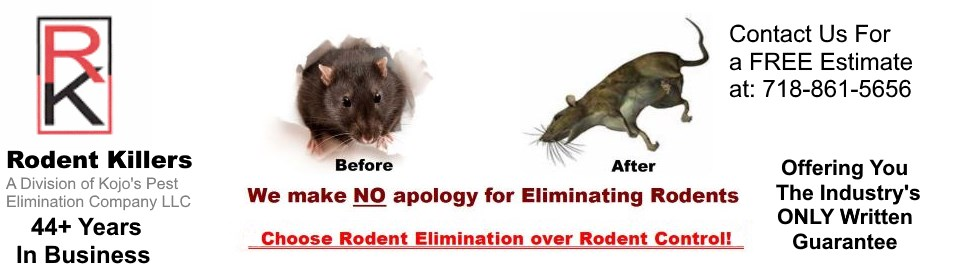 Rodent Killers Serving NYC and Northern Jersey