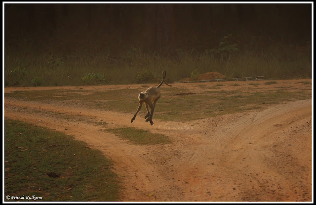 Run for your Life...Kanha National Park