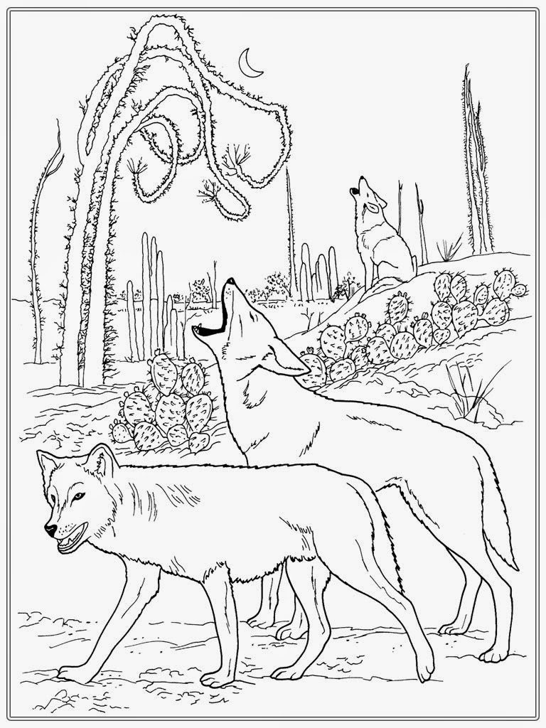 Coloring pages for adults wolf - Realistic Wolf Adult Coloring Pages