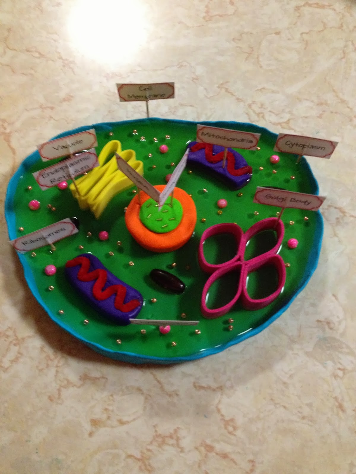 Plant Cell Diagram With Labels Animal Cell Diagram With ...