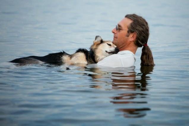 El perro el mejor amigo del hombre