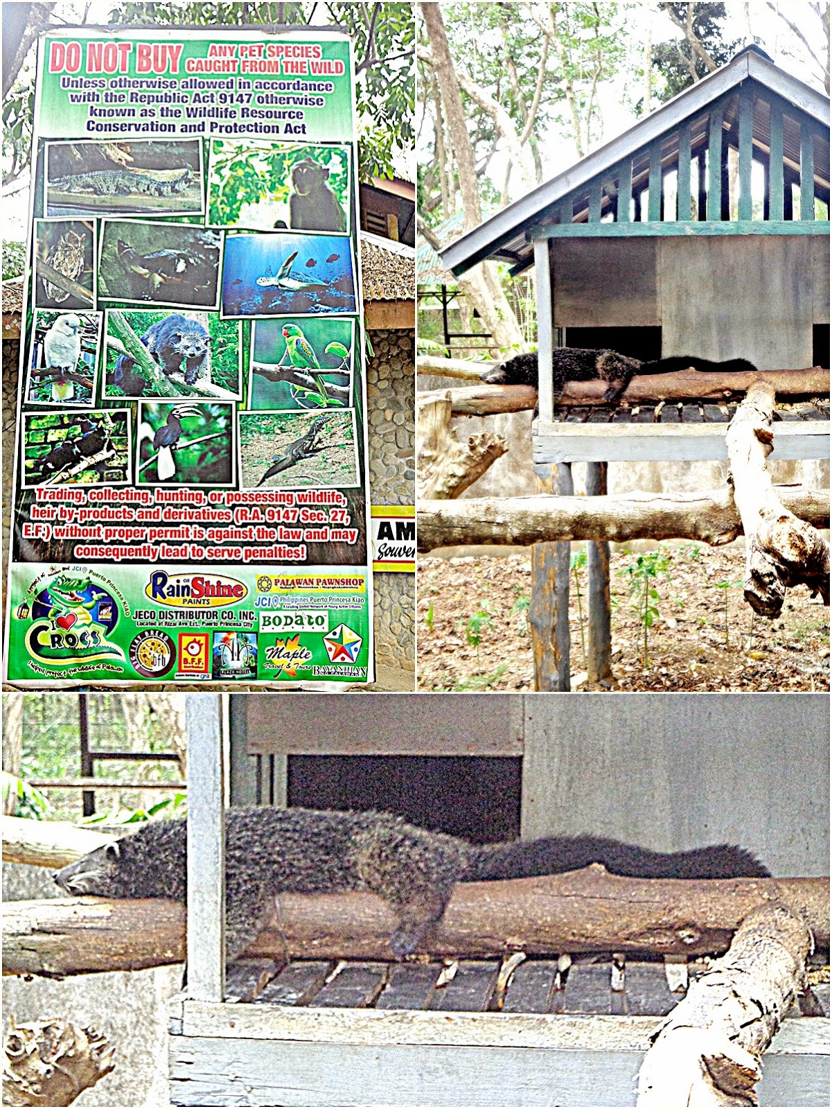 palawan crocodile farm, palawan wildlife rescue and conservation center