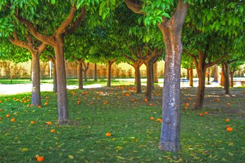 Una cabeza sembrada una cerradura entre naranjos - Giardino degli aranci frattamaggiore ...