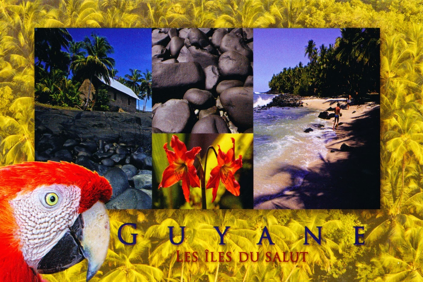 postcard, french guiana