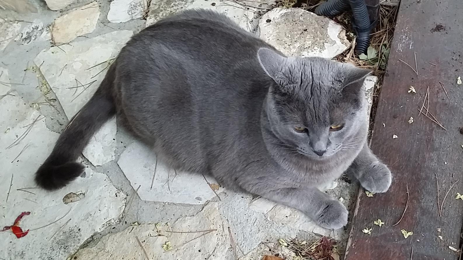 lavande et mon chat