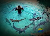 kolam penangkaran hiu karimun jawa