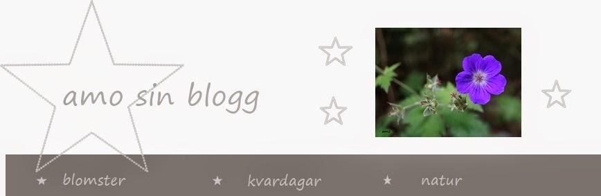 amo sin blogg