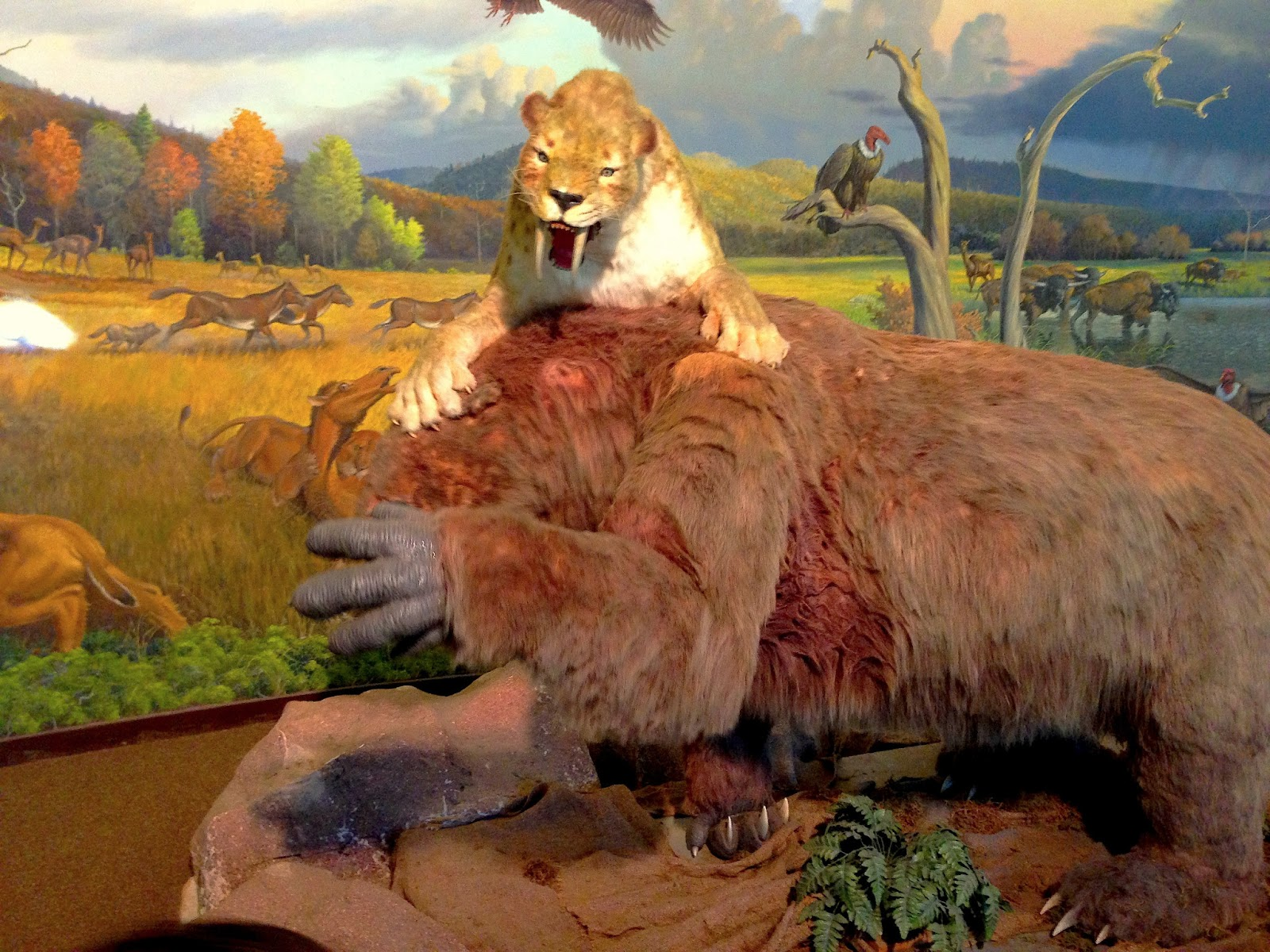 how to make a saber tooth tiger