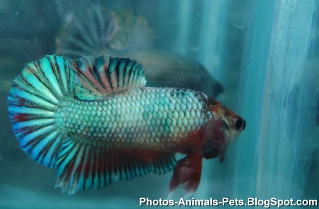http://1.bp.blogspot.com/-gVyYS0oHNqw/TZs4NEsudEI/AAAAAAAAAa8/Ny8EeoXpG7w/s1600/fish+images+_0019.jpg