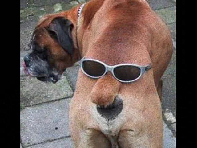 El Culo con Gafas