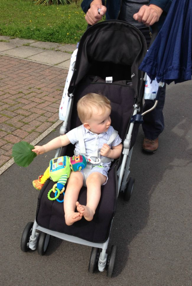 baby sat in stroller holding leaf in right hand