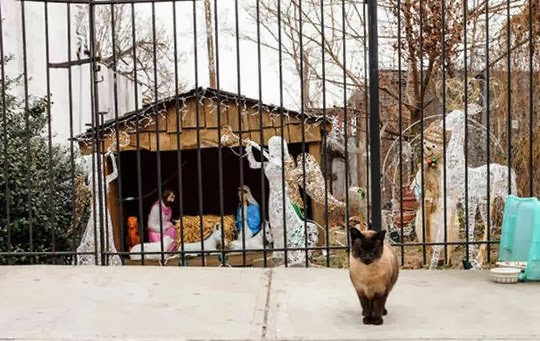 Christmas nativity scene with cats