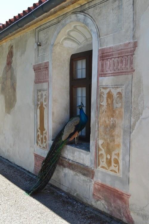 kratochvíle, zámek, české budějovice, čechy, česká republika, páv, peacock