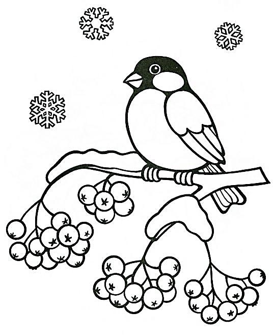 Перелетные и зимующие птицы раскраски