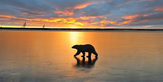 20 Beautiful animal photos - part 2, amazing animal pictures, beautiful animal wallpapers, animal wallpaper, beautiful animal pictures