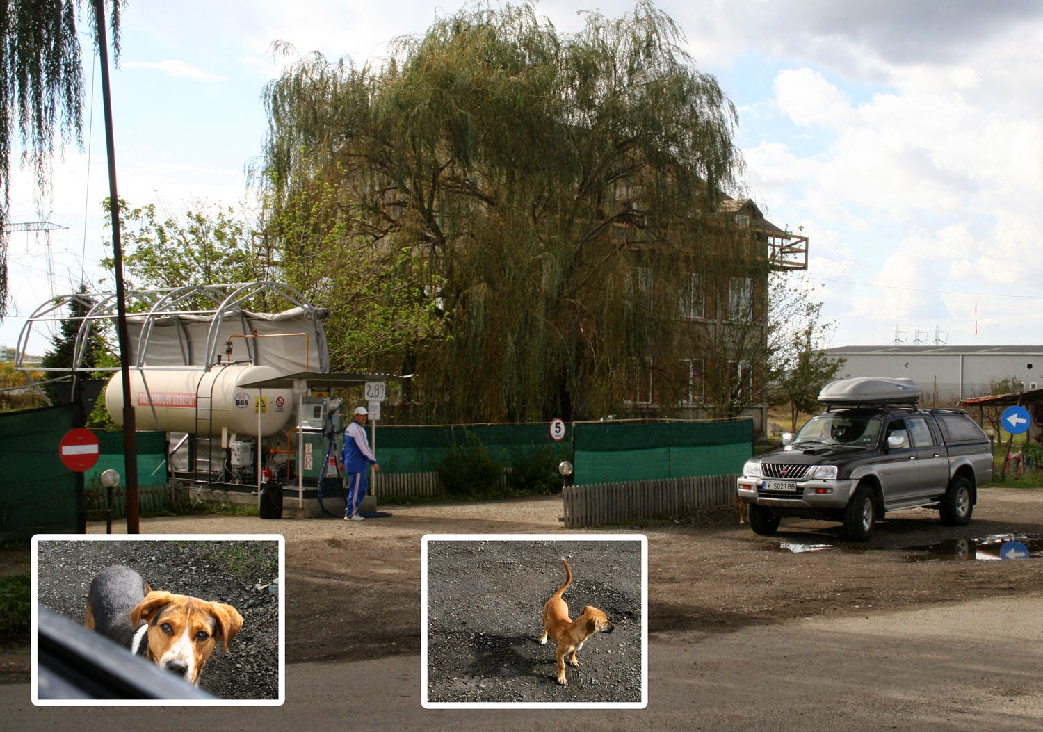 A Romanian service station, and the strays