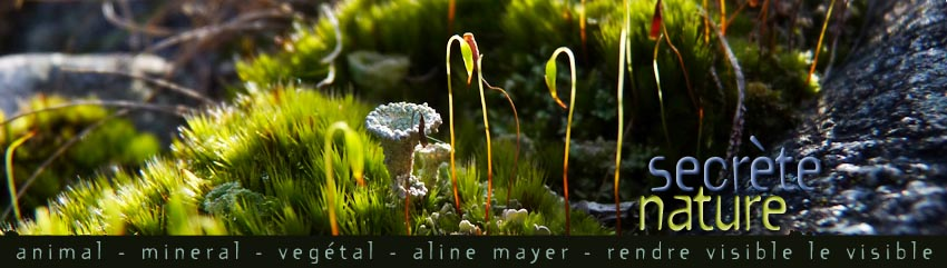 aline mayer  :  art nature, photo, graphisme, poésie