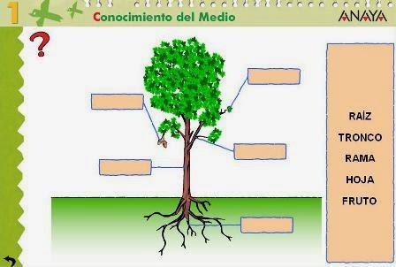 http://www.juntadeandalucia.es/averroes/centros-tic/41009470/helvia/aula/archivos/repositorio/0/57/html/datos/03_cmedio/03_Recursos/actividades/3LasPlantas/act1.htm
