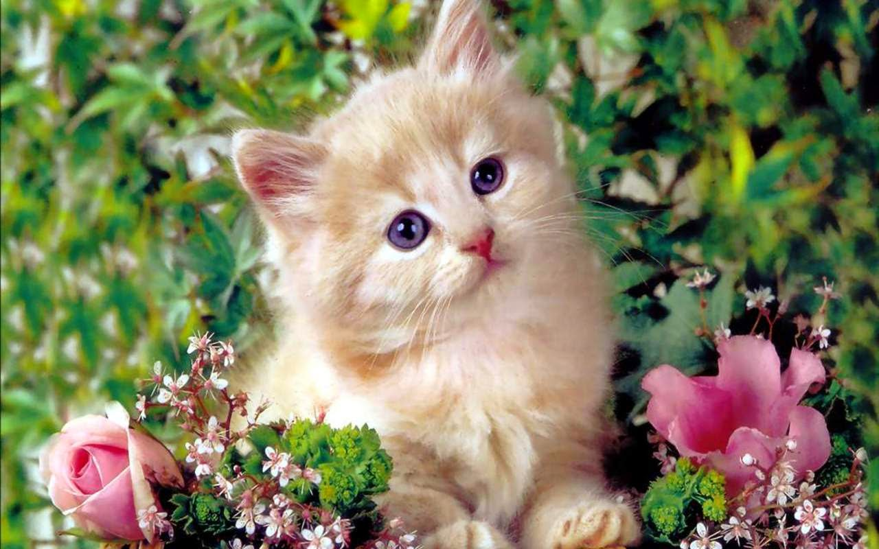 Baby kittens photos and wallpapers snipping world - Baby kitten backgrounds ...