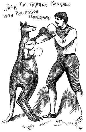 Kangaroo Jack Boxing