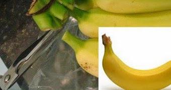 Como eliminar a mosca de frutas.
