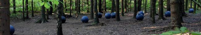 blåbærskogen