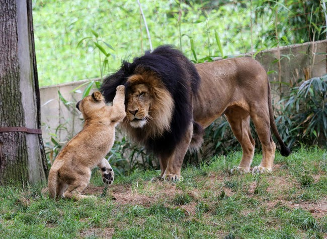 الحيوانات desktop-1425574563.jpg
