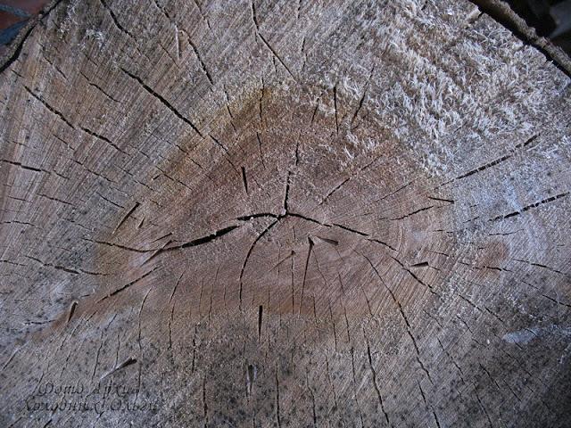 Текстура древесина