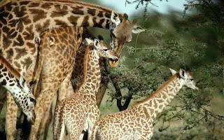 imagen de  safari salvaje