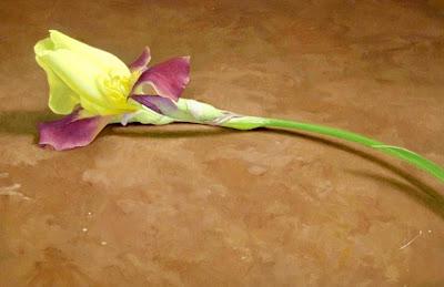 flores-en-oleo