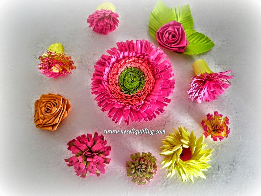 neseli-quilling-fringed-flower
